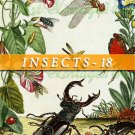 INSECTS-18 204 vintage print