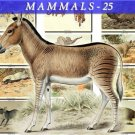 MAMMALS-25 67 vintage print