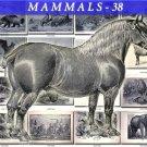 MAMMALS-38-bw 133 black-, -white vintage print