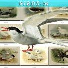 BIRDS-54 64 vintage print