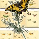 BUTTERFLIES-24 93 vintage print