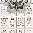 BUTTERFLIES-43-bw 138 black-, -white vintage print
