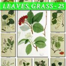 LEAVES GRASS-25 223 vintage print