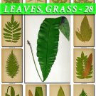 LEAVES GRASS-28 204 vintage print