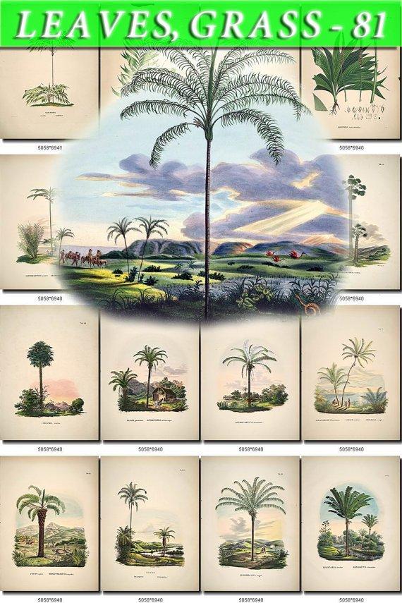LEAVES GRASS-81 320 vintage print