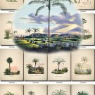 LEAVES GRASS-81 320 vintage print