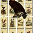 BIRDS-71 337 vintage print