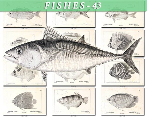 FISHES-43-bw 150 vintage print