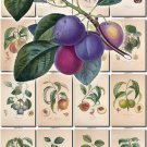 FRUITS VEGETABLES-18 110 vintage print
