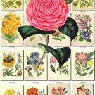 FLOWERS-19-b1 245 vintage print
