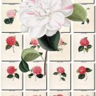 CAMELLIAS-3 flowers 100 vintage print