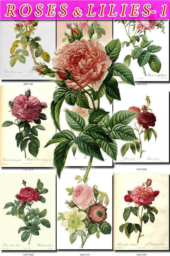 ROSES-1 ,  LILIES 80 vintage print
