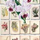 ORCHIDS-16 flowers 275 vintage print