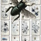 INSECTS-35 66 vintage print