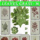 LEAVES GRASS-36 110 vintage print