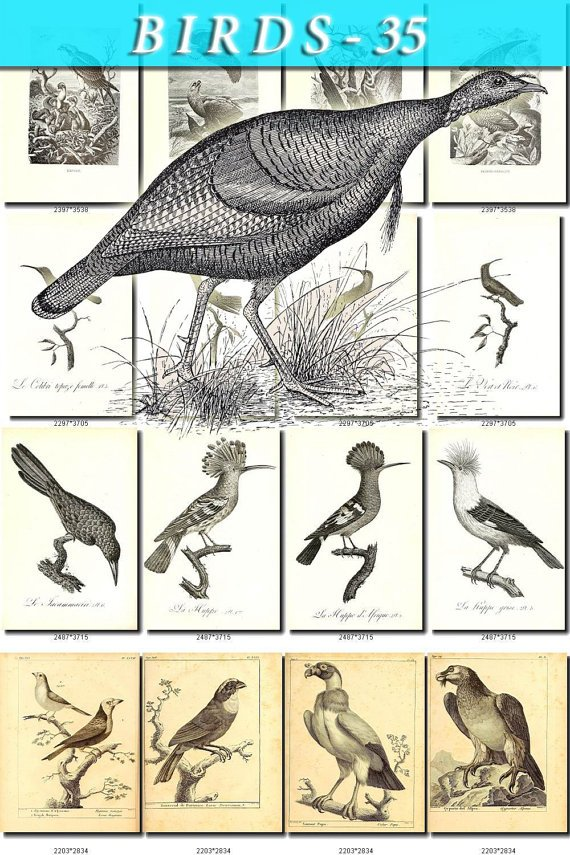 BIRDS-35-bw 208 black-, -white vintage print