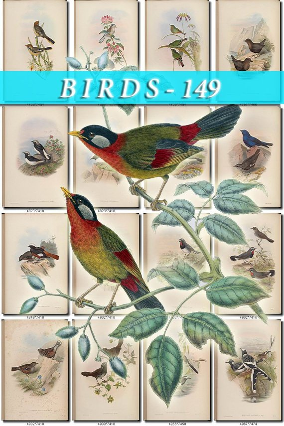 BIRDS-149 161 vintage print