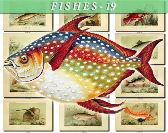 FISHES-19-b1 116 vintage print