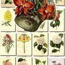 FLOWERS-91 297 vintage print