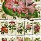 FLOWERS-96 289 vintage print