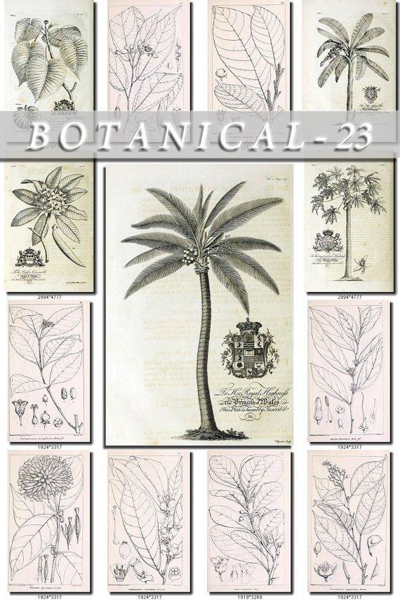 BOTANICAL-23-bw 375 black-, -white vintage print