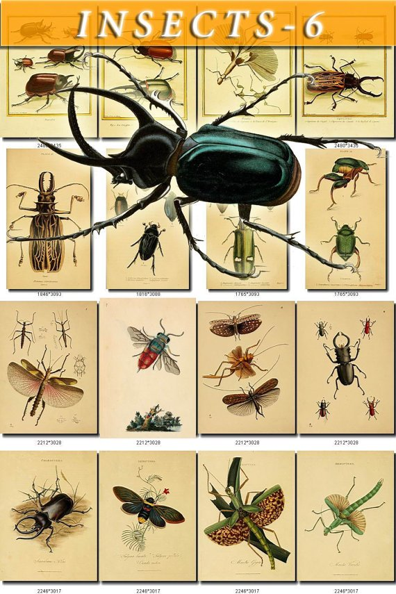 INSECTS-6 268 vintage print