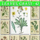 LEAVES GRASS-42 192 vintage print