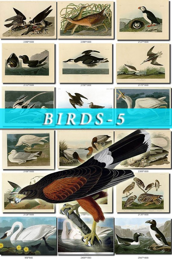BIRDS-5 500 vintage print