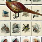 BIRDS-24 220 vintage print