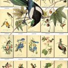 BIRDS-117 139 vintage print