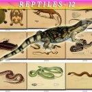 REPTILES & AMPHIBIAS-12 88 vintage print