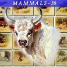 MAMMALS-39 129 vintage print