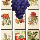 FRUITS VEGETABLES-3 73 vintage print