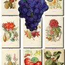 FRUITS VEGETABLES-3 73 vintage print