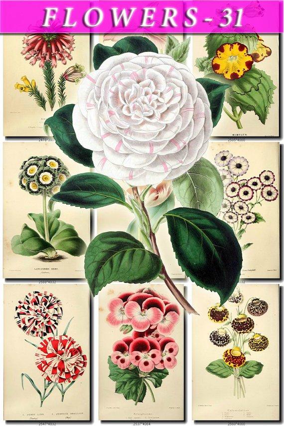 FLOWERS-31 64 vintage print