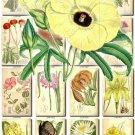 FLOWERS-85 220 vintage print