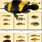 FISHES-33 51 vintage print