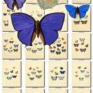 BUTTERFLIES-46 165 vintage print