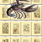 INSECTS-2 276 vintage print