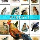 BIRDS-1 980 vintage print