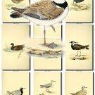 BIRDS-104 57 vintage print