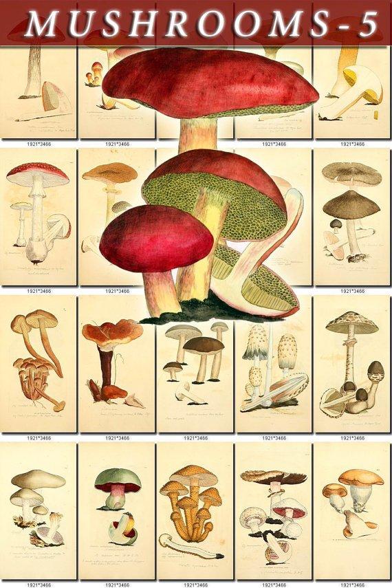 MUSHROOMS-5 434 vintage print