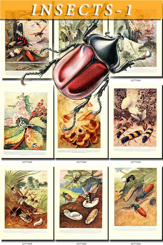 INSECTS-1 249 vintage print