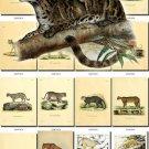 CATS-2 52 vintage print