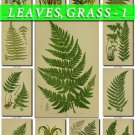LEAVES GRASS-1 248 vintage print