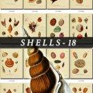 SHELLS-18 228 vintage print
