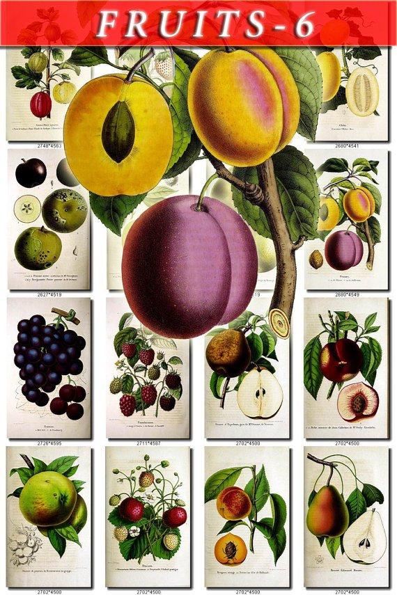 FRUITS VEGETABLES-6 51 vintage print