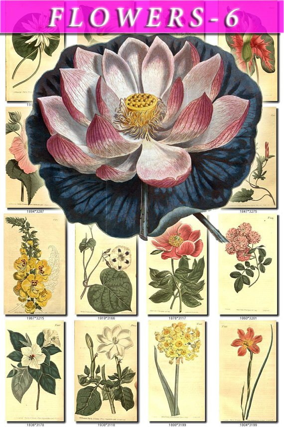 FLOWERS-6 276 vintage print