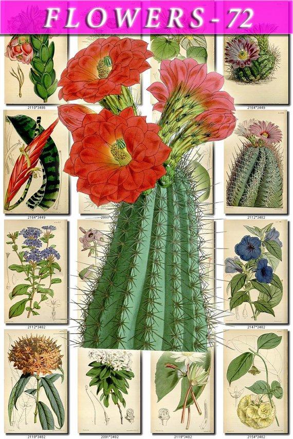 FLOWERS-72 209 vintage print