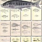 FISHES-50-bw 233 vintage print